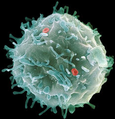 Scientists clone the first human embryonic stem cells